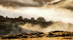 Sunrise and the fog (NikNak Allen) Tags: plymouth devon dartmoor moor moorland grass tree mist hill hills valley tor tors morning light weather landscape sun gold golden