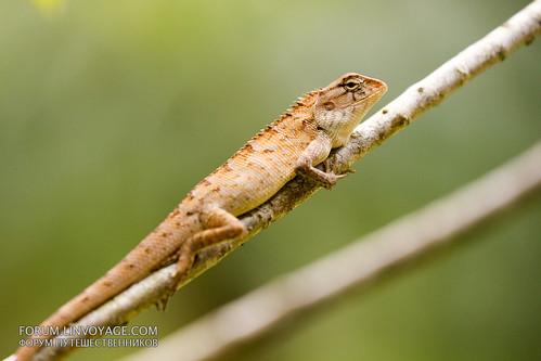 Lizard on a tree                 THX_2975s-new
