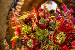 2016 Philadelphia Flower Show (kyle.tucker95) Tags: philadelphia pennsylvania pennsylvaniaconventioncenter flowershow 2016 flower plant pennsylvaniahorticulturalsociety horticulture hdr photomatix canon eos7d