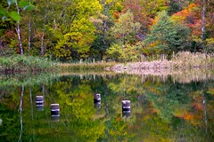 Pile (tez-guitar) Tags: water pond reflection reflections autumn autum autumn leaf leaves pentax pentaxart wood forest tree trees mountain highland nagano