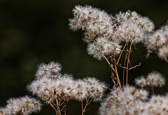 L'automne en douceur (mrieffly) Tags: automne douceur canoneos50d 100400issriel