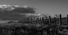 Isle of Man (Greg Adams Photography) Tags: iom isleofman travel 2016 hhsc2000 field fence clouds sky daybreak morn morning grass poles