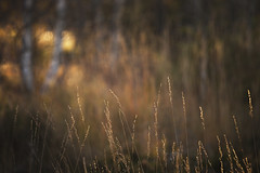 Warm light (Creative Days) Tags: fall autumn norge norway warmlight sunset forest canon nature