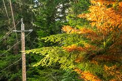 DSCF4279 (LEo Spizzirri) Tags: bevin morgan peter odin huck huckleberry shug cabin northwest seattle forest pacific mushroom moss josh betsy ladder green thick