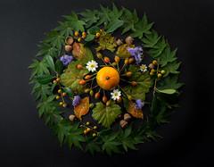 Autumn, slowly. #Autumnleaves #flickrfriday (BSchwend1) Tags: autumn flickrfriday autumnleaves tangerine orange holly berries grapeleaves crepemyrtle rosehips acorns blackfootdaisy japanesemaple maple