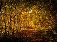 Tunnel (matthiasstiefel) Tags: tunnel autumn trees light warm herbst licht sonne