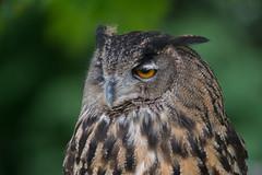 _ATI4886 (Aitzol Arruabarrena) Tags: cabarceno d800 tokina 300 animals animaliak