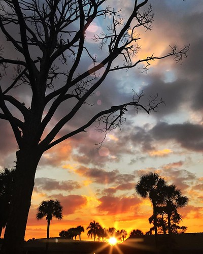 My favorite tree! #Sunset #BocaRaton #Florida