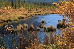 IMG_9787 (ctmarie3) Tags: banffnationalpark vermilionlakes thirdvermilionlake