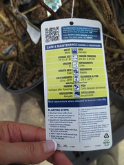 IMG_1415 (pbinder) Tags: 2016 201603 20160322 march mar tuesday tue kansas city missouri kansascity kansascitymissouri kc mo kcmo lowes plants