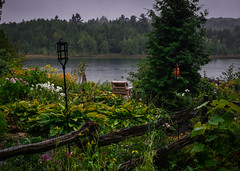 The View (SarahJKelleher) Tags: view scenery water wild plants nature landscape colours colors colourful colorful green yellow trees sky ontario canada light nikon nikond7200 nikon35mm 35mm lightroom