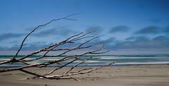 Sideways Tree (F_Eglesfield) Tags: tree driftwood kaiapoi waimakariri blue slow shutter long exposure nz new zealand fujifilm fuji fujinon xe2 1855 canterbury beach
