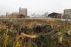 Biodiversity Roof (Andy Underscore) Tags: greenroof biodiversityroof birmingham