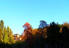 SCHRAMBERG IM SCHWARZWALD: KURPARK MIT HOTEL (ehbub@yahoo.de) Tags: schwarzwald tannenbaum laubbaum hotel herbst