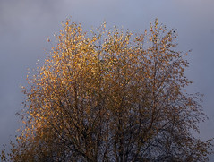 Autumn leaves and stormy sky (jonathan charles photo) Tags: autumn fall colour sunlight storm art photo jonathan charles topf25