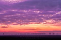 Tree Line Sunset 04 (Photograferry) Tags: sunset trees treeline evening twilight dusk landscape thefens cambridgeshire clouds red colourful scenics beautyinnature nopeople outside mist fog