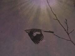 Mockingbird Takes Flight (clarkcg photography) Tags: bird flight flap wing feathers beak air sky limb quick leap faunasunday7dwf 7dwf mockingbird fall oklahoma modifcation apps textures saturated slidersunday