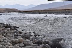MAQ_0439 (MolviDSLR) Tags: deosair national park skardu gilgit baltistan northern areas pakistan brown bear wild life scenery landscape