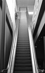 """Minimal"" (giannipaoloziliani) Tags: details escalator biancoenero monocromatico monochrome blackandwhite minimal scale scala scalamobile metal prospettiva perspective geometry geometrico geometria architecture light prospettica italy focalpoint nikond3200 nikoncamera nikon steps modern inox"