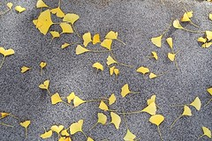 1 with Empty Space (Mertonian) Tags: yellow concrete autumn mertonian robertcowlishaw canon powershot g7 mark ii canonpowershotg7xmarkii leaves texture space leaf awe wonder lunchwalk lookingdown ineffable beautiful beauty