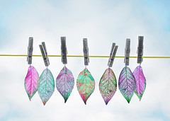 leaves on a clothes line (Hal Halli....happy everything!!) Tags: awardtree magicunicornverybest artdigital netartii redmatrix greatphotographers innamoramento