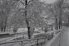 Neige (Fontenay-sous-Bois - Officiel) Tags: fontenay fontenaysousbois regionparisienne valdemarne iledefrance 94 94120 paris neige snow outside parc park nature