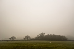 Grey day grazing (Stuart.67) Tags: mist misty field trees fog sheep nikon d800 somerset england farm green grey dull naturethroughthelens
