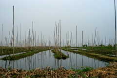 Floating gardens (*Kicki*) Tags: garden floating inlelake inle inlaylake inlay shanstate sky water canal growing 50mm myanmar burma bamboosticks reflections