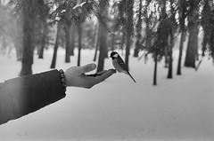 Be kind, Saint Petersburg, feb2016 (juliagarkushenko) Tags: shootingfilm shootfilmstayhappy filmphotography 35mm nature bird petersburg she traveling winter blackandwhite hp5plus ilford minolta
