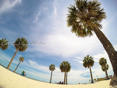 Florida Trip 2016 (Lost Destiny Photos) Tags: trip vacation palm trees tropical beach sand water ocean photography nikon d750 land landscape fly sky space clouds air aviation florida state party travel canon gopro hero hd black 3 high height