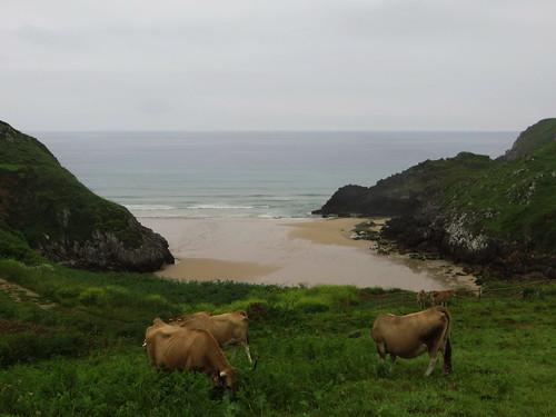 20160604 17 083 Jakobus Meer FelsenKüste Strand Kühe
