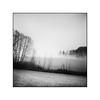 Foggy times (cardijo) Tags: austria österreich salzburg landscape landschaft fog nebel winter tree baum analog film ilford fp4 rodinal rolleiflex tessar carlzeiss 6x6