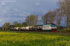 1015 - 652_002 + CISTERNE a MIGLIARINO PISANO 22-4-2013 (RHO - SCARLINO) FULL HD (Frank Andiver TRAIN IN TUSCANY) Tags: italy train canon frank photo italia photos rail trains tuscany rails locomotive toscana treno tigre fs trenitalia treni ferrovie binario 652 e652 fullhd andiver frankandiver trainintuscany