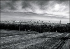 Meadowlands NJ (TheJonCrane) Tags: sky blackandwhite clouds contrast digital landscape outside photography newjersey nj photojournalism meadowlands popular photojournalist featured capturedmoments