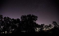 (lkaloti) Tags: trees sky night canon dark stars geotagged photography sanjose clear galaxy galaxies milkyway mounthamilton josephdgrantcountypark canon6d
