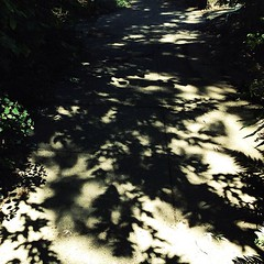 """#shadows #trees • <a style=""""font-size:0.8em;"""" href=""""https://www.flickr.com/photos/61640076@N04/9720991414/"""" target=""""_blank"""">View on Flickr</a>"""