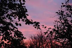 Through The Branches (EJ Images) Tags: uk trees sunset england sky colour tree slr leaves silhouette clouds evening suffolk nikon branch nef colours shadows dusk branches silhouettes dslr eastanglia settingsun lowestoft nikonslr d90 nikondslr pakefield 2013 nikond90 18105mmlens ejimages dsc048403