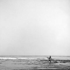 Walking across the sea kelp, Santa Cruz, USA, 2013 [#038811] (Jeff Merlet Photography) Tags: california bw usa santacruz film beach square blackwhite log surf pacific surfer contest wave surfboard rider 2013 oceanriders jeffmerletphotography jeffmerlet jeffmerletcom jeffjeffmerletcom oceanridersproject oldboardsnocordslogjamcontest oldboardsnocordslogjamproject logjam2013 038811