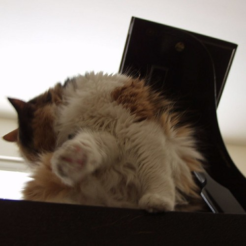 Cat on the baby grand