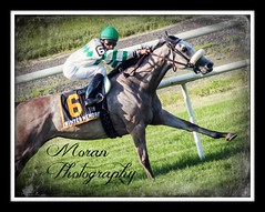 Winter Memories (EASY GOER) Tags: horses horse art sports canon belmont racing stretch jockey frame athletes races turf thoroughbred equine thoroughbreds stride equines tbracing