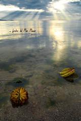 frutos del Mar Menor (Cani Mancebo) Tags: espaa murcia amanecer marmenor canimancebo