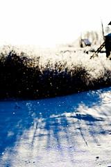 (PhGra_f) Tags: blue winter sun snow cold nature canon 50mm bush russia bokeh siberia freeze m42 russland carlzeissjena 40d omskregion