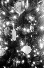 2013122604 (J E) Tags: christmas zeiss box delta 3200 ikon ilford xtol 542 tengor