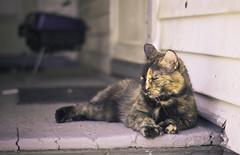 napping cat (porschelinn) Tags: sleeping cute animal burlington cat canon eos soft vermont nap neighborhood porch 550d t2i