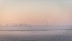 _DSC5652.jpg (Ingeborg Ruyken) Tags: morning autumn sky sun mist ice fog sunrise dawn haze nevel flickr frost december herfst freezing lucht polder zon risingsun ochtend facebook ijs boerderij vorst zonsopkomst kruisstraat natuurfotografie vriezen 2013 opkomendezon catsunriselandscape catfogandmist