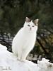 (Sarah-Vie) Tags: cat chat gato img 0637