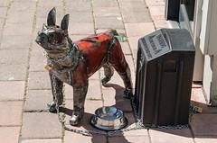 newzealand christchurch dog art metal shadows bowl chain sydenham caft