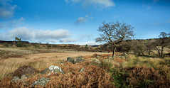 Longshaw (IanMcConnachie) Tags: trees peakdistrict moor longshaw canon1740f4l padleygorge canon5dmkiii