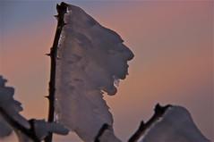 "l' urlo del ... vento ("" paolo ammannati "") Tags: sunset sky panorama mountain snow forest raw tramonto photographer shot top natura io cielo tuscany neve toscana inverno montagna verna bosco casentino ghiaccio foresta laverna chiusidellaverna effettinaturali fotoconneve panoramaconneve"