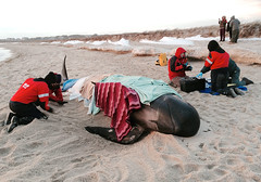 Cape Cod Pilot Whale Stranding (Chris Seufert) Tags: capecod chatham cnn beached whale stranded pilot bostonist ireport ifaw strandingnetwork